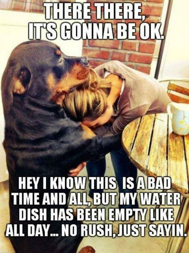 Rottweiler - THERE THERE IT'S GONNA BE OK HEY I KNOW THIS IS ABAD TIME AND ALL BUT MY WATER DISH HAS BEEN EMPTY LIKE ALL DAY.. NO RUSH, JUST SAYIN