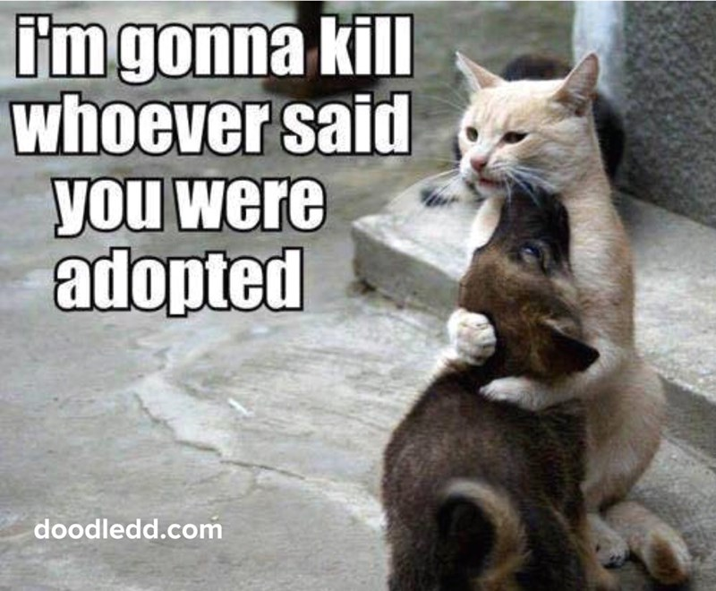 Cat - Imgonna kill whoever said you were adopted doodledd.com