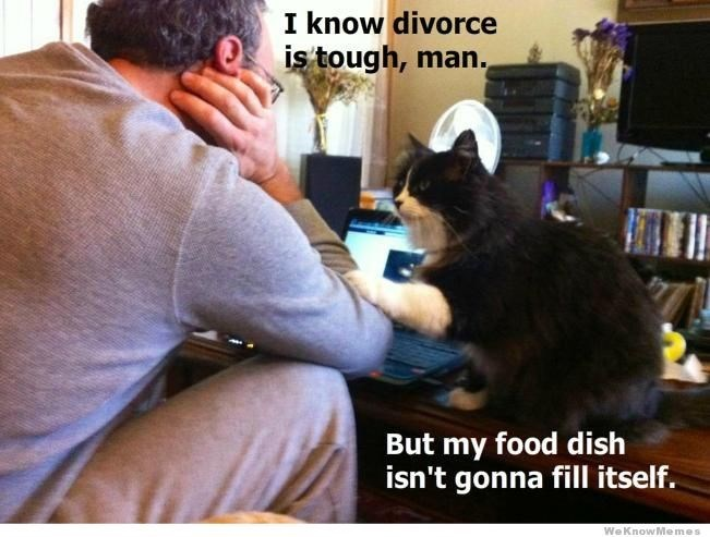 Cat - I know divorce is tough, man., But my food dish isn't gonna fill itself. We KnowMe mes