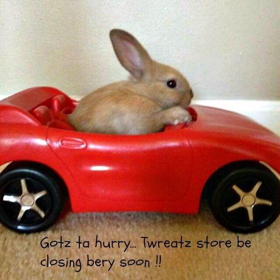 Rabbit - Gotz ta hurry...Twreatz store be dosing bery Soon!