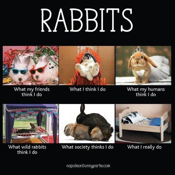 Photo caption - RABBITS What I think I do What my friends think I do What my humans think I do What society thinks I do What I really do What wild rabbits think I do napoleonbunnypartecom