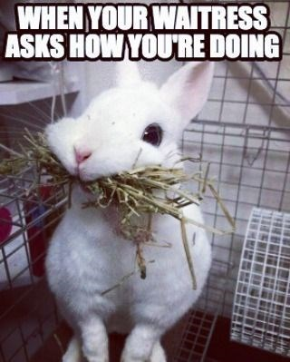 Rabbit - WHEN YOUR WAITRESS ASKS HOW YOURE DOING