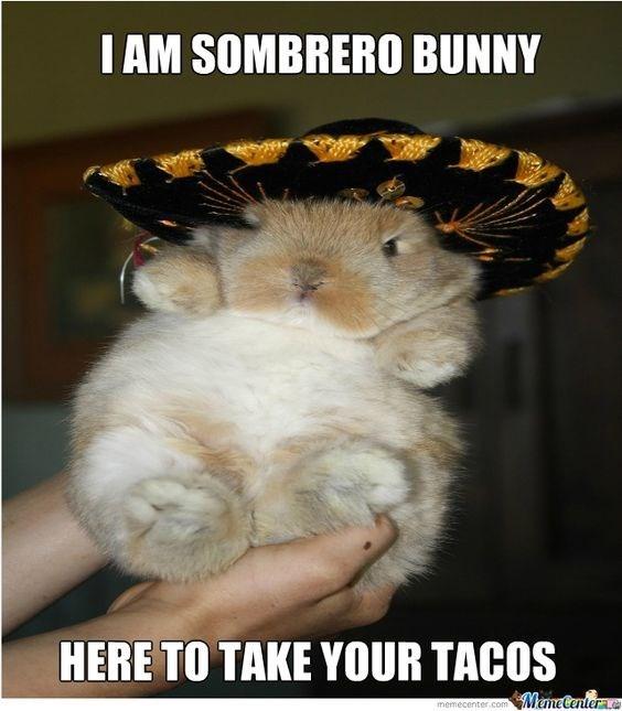 Photo caption - I AM SOMBRERO BUNNY HERE TO TAKE YOUR TACOS MameCenter memecenter.com