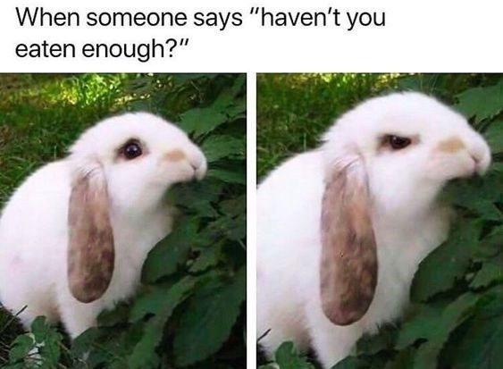 "Vertebrate - When someone says ""haven't you eaten enough?"""