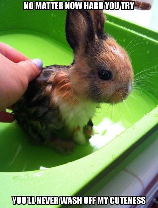 Rabbit - NO MATTER NOW HARDYOU TRY YOULL NEVER WASH OFF MY CUTENESS