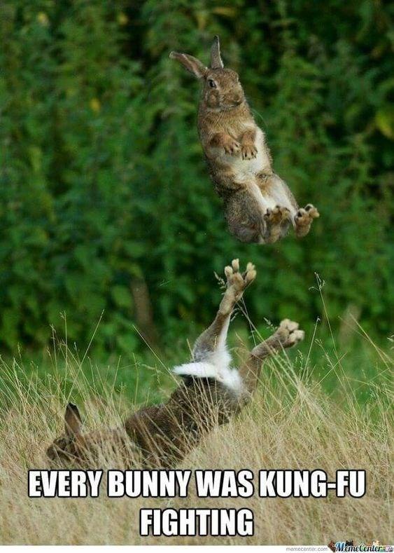 Wildlife - EVERY BUNNY WAS KUNG-FU FIGHTING ManeCenter memecentes.com