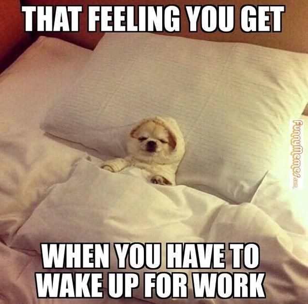 TFW - Photo caption - THAT FEELING YOU GET WHEN YOU HAVE TO WAKE UP FOR WORK