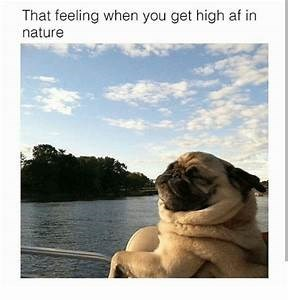 TFW - Pug - That feeling when you get high af in nature