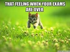 TFW - Cat - THAT FEELING WHENYOUR EXAMS AREOVER