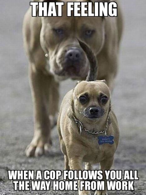 TFW - Dog - THAT FEELING WHEN A COP FOLLOWS YOUALL THE WAY HOME FROM WORK