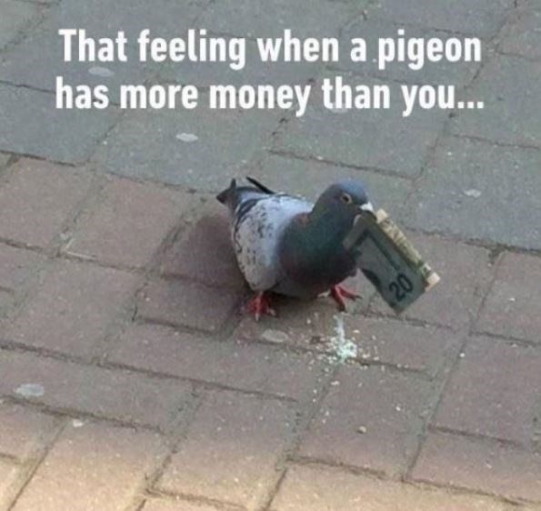 TFW - Bird - That feeling whena pigeon has more money than you... 20