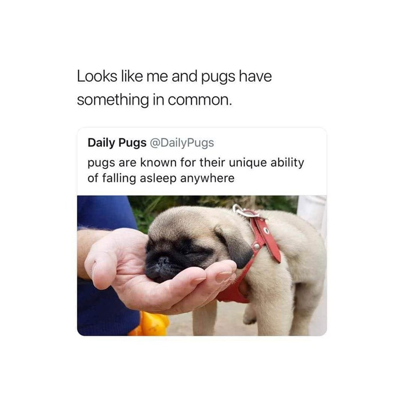 Pug - Looks like me and pugs have something in common. Daily Pugs @DailyPugs pugs are known for their unique ability of falling asleep anywhere
