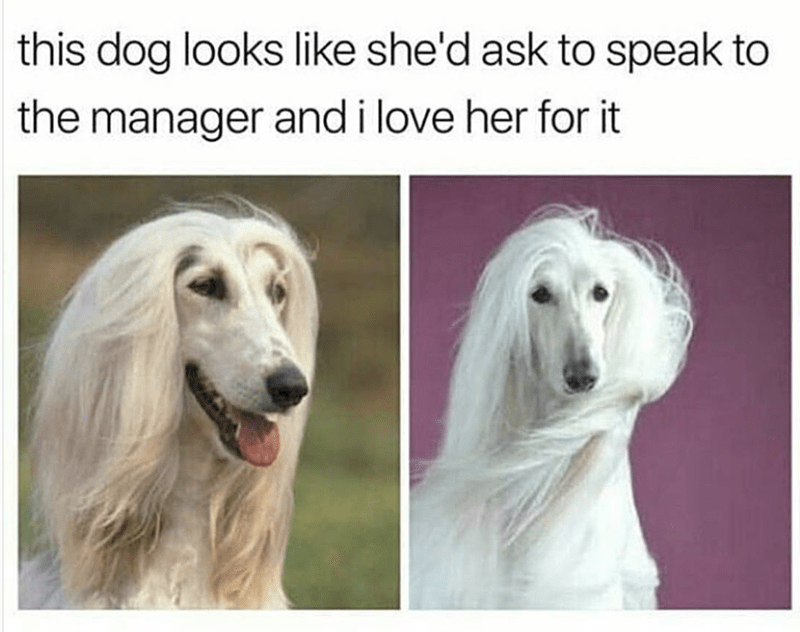 Dog - this dog looks like she'd ask to speak to the manager and i love her for it