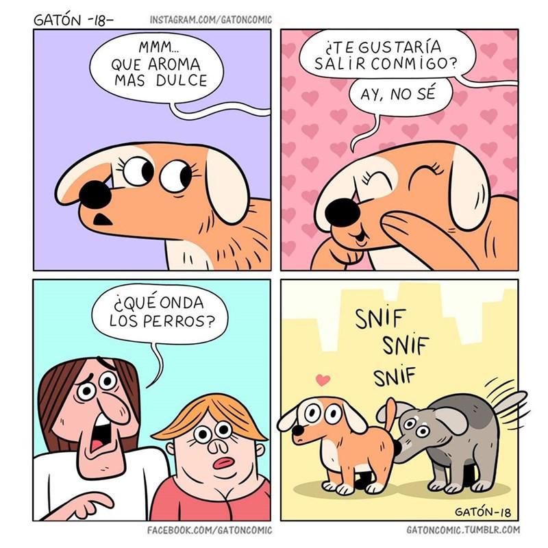 que aroma mas dulce amor entre perros