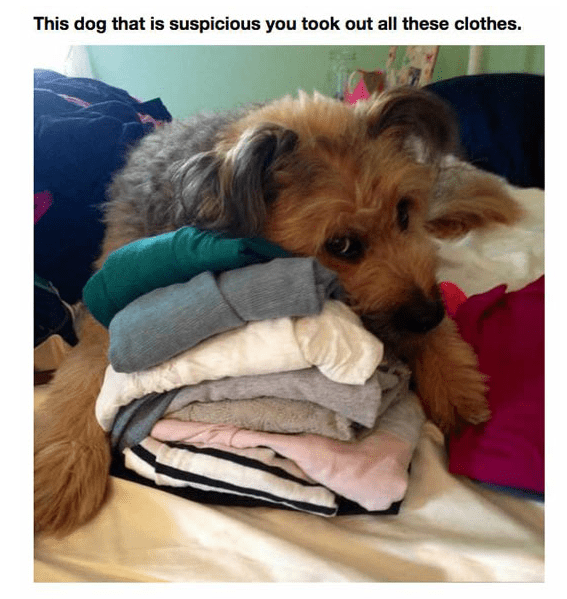 Dog - This dog that is suspicious you took out all these clothes.