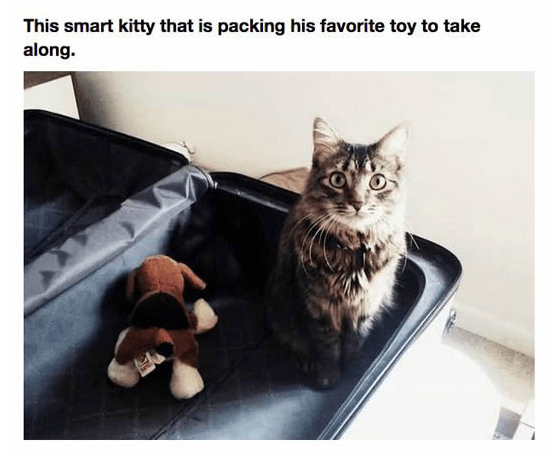 Cat - This smart kitty that is packing his favorite toy to take along.