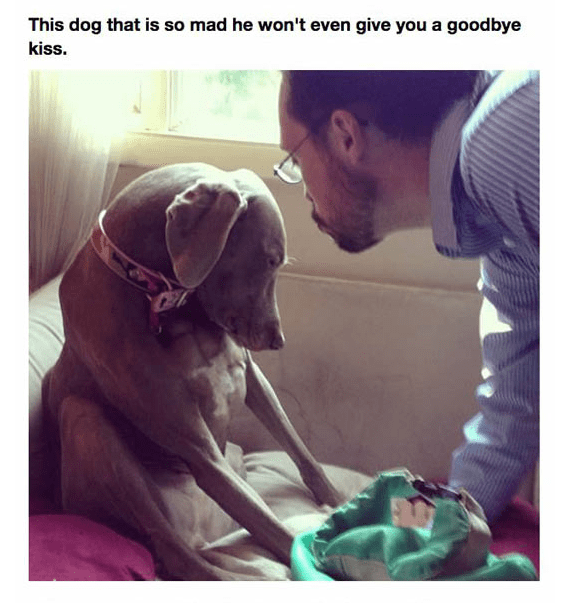 Dog - This dog that is so mad he won't even give you a goodbye kiss.