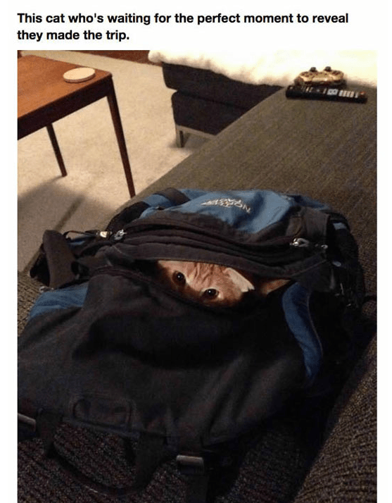 Bag - This cat who's waiting for the perfect moment to reveal they made the trip.