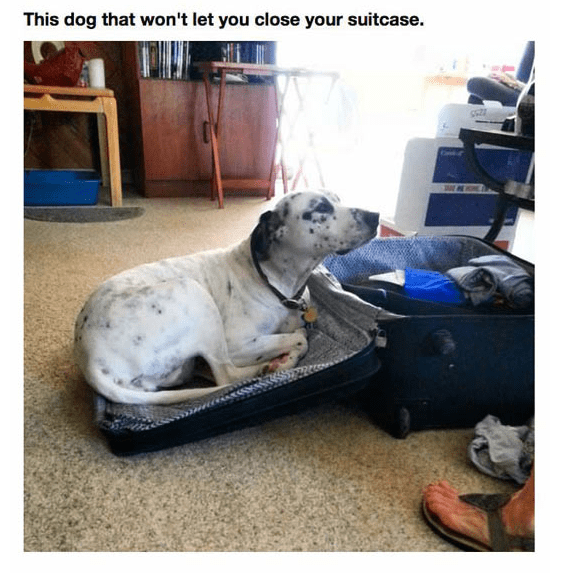Dog - This dog that won't let you close your suitcase.