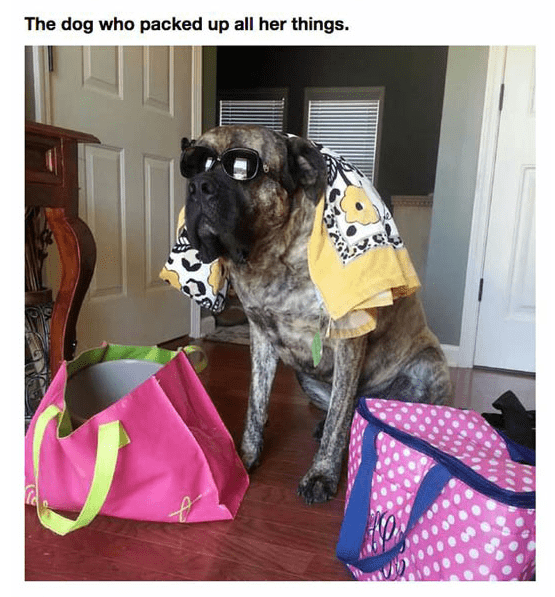 Dog - The dog who packed up all her things.