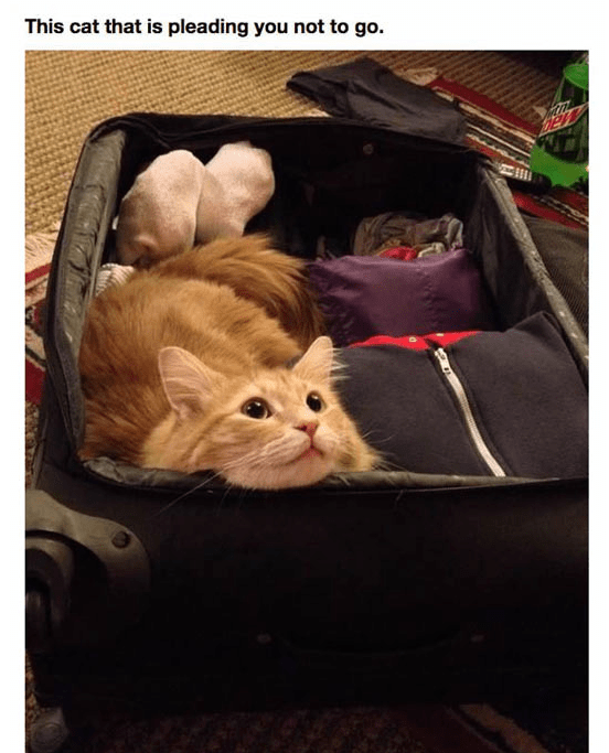 Cat - This cat that is pleading you not to go.