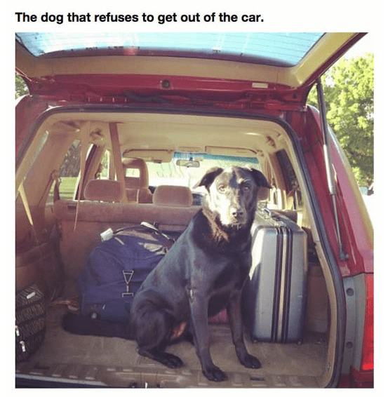 Vehicle door - The dog that refuses to get out of the car. D-L