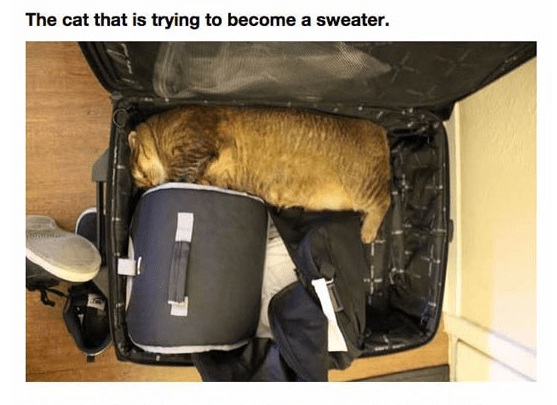 The cat that is trying to become a sweater