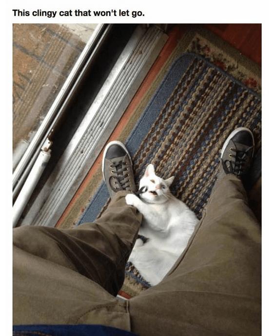 Cat - This clingy cat that won't let go.