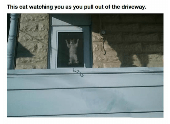 Window - This cat watching you as you pull out of the driveway.