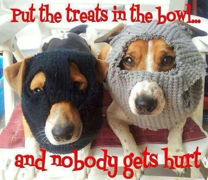 Dog - Put the treets in the bow and nobody gets hurt