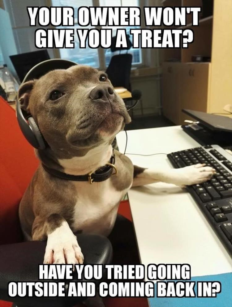 Dog - YOUROWNER WON'T GIVE YOU A TREAT? HAVE YOU TRIEDGOING OUTSIDE AND COMING BACKIN?