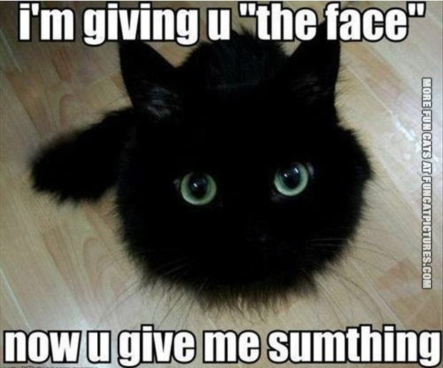 "Cat - i'm giving u ""the face"" nowugive me sumthing MORE FUN CATS AT FUNCATPICTURES.COM"
