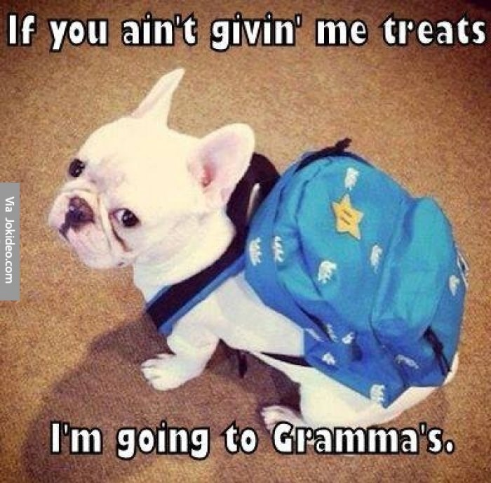 Dog - If you ain't givin' me treats I'm going to Gramma's Via Jokideo.com