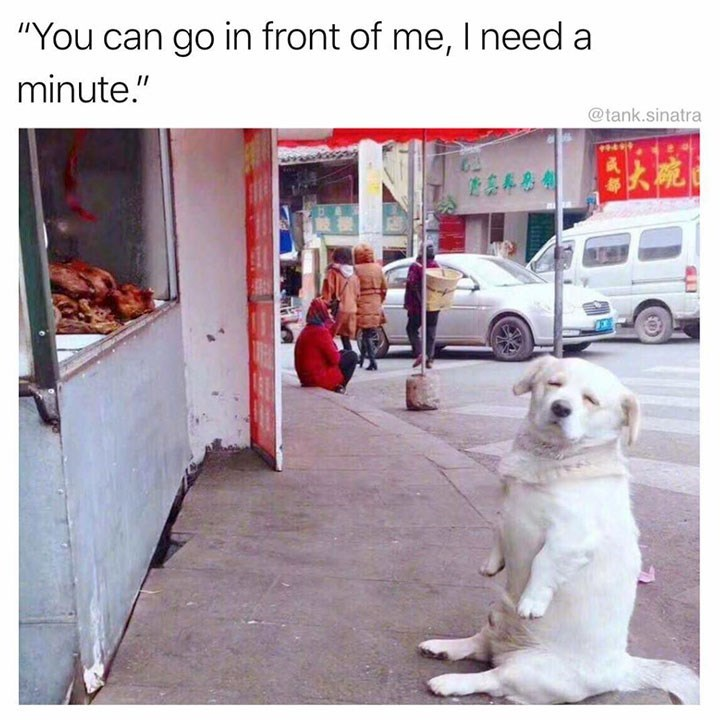 dog meme of a dog closing its eyes in front of a store