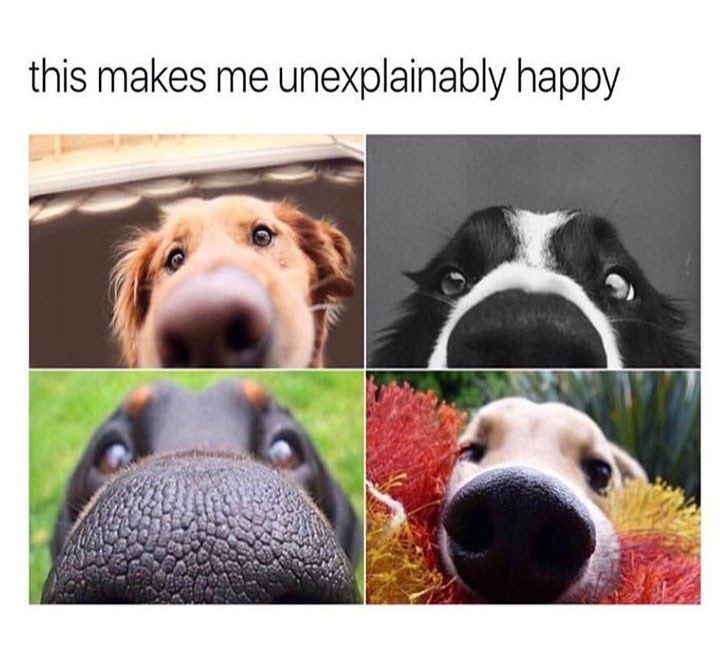 dogs meme of pic of of dogs from the angle of their noses