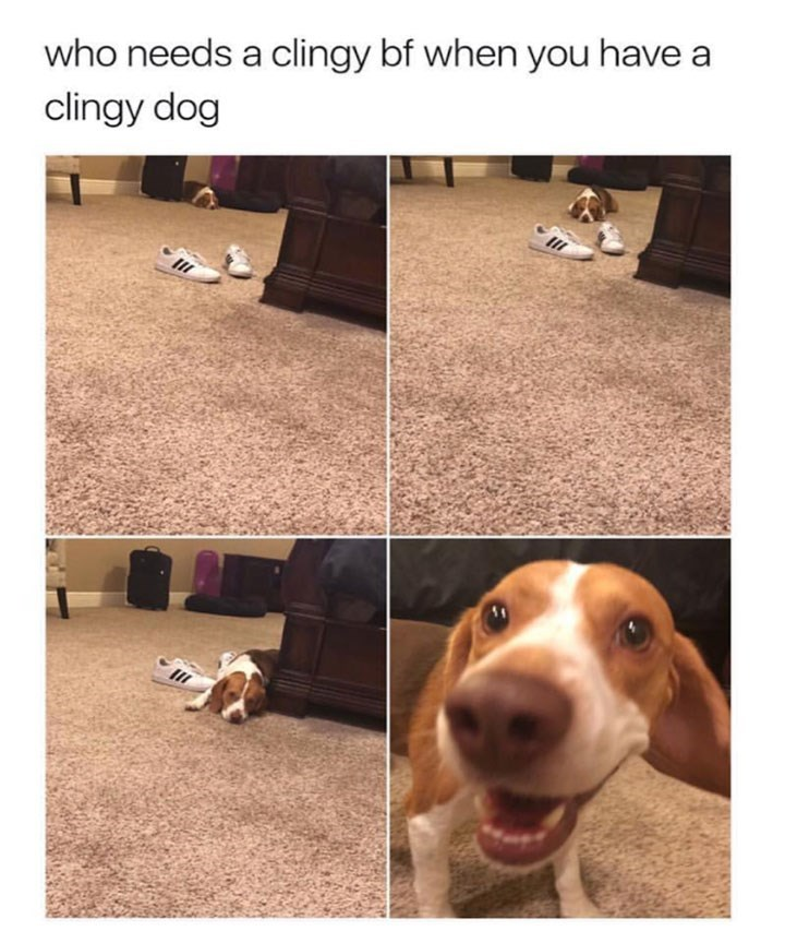 dog meme of a dog that is very clingy with its owner