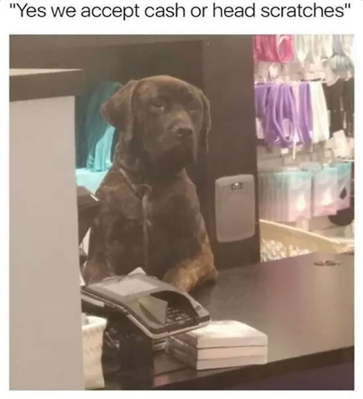 dog meme standing behind a register with a bored expression