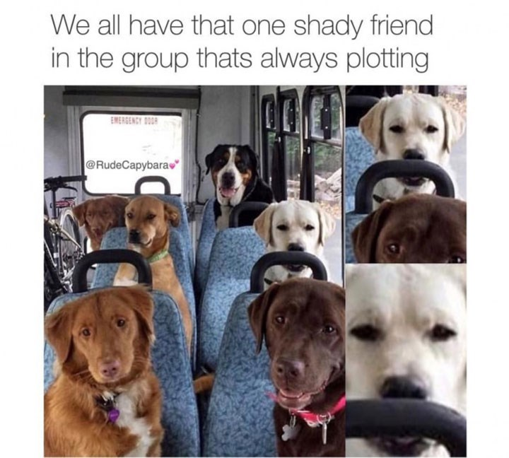 dogs meme sitting inside a bus and one dog has a contemplating expression