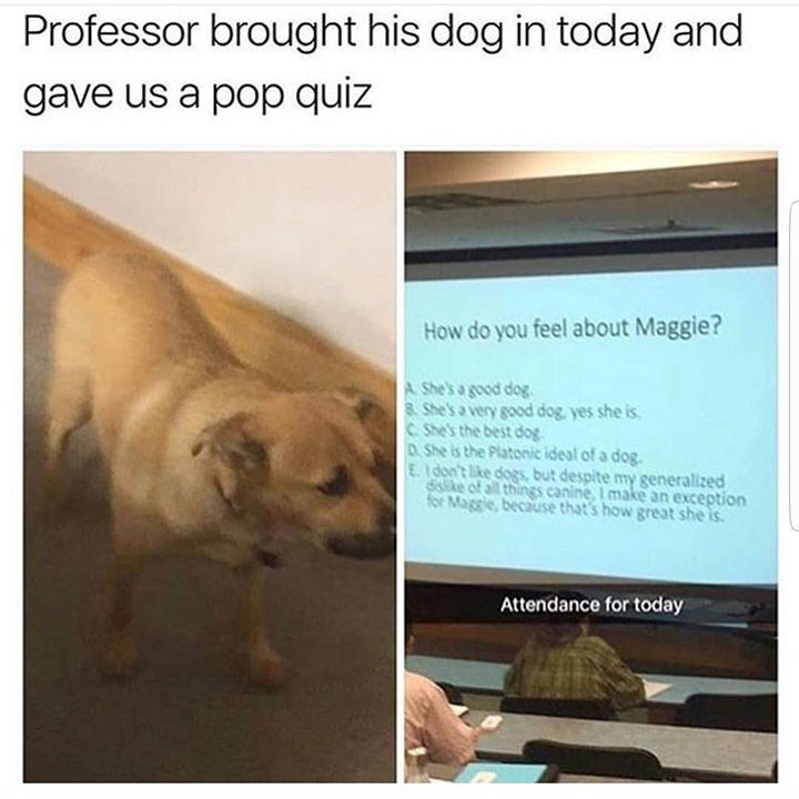 dog meme of a teacher that gave a quiz to his class and asked about his dog