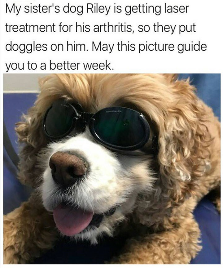 dog meme wearing goggles for his arthritis