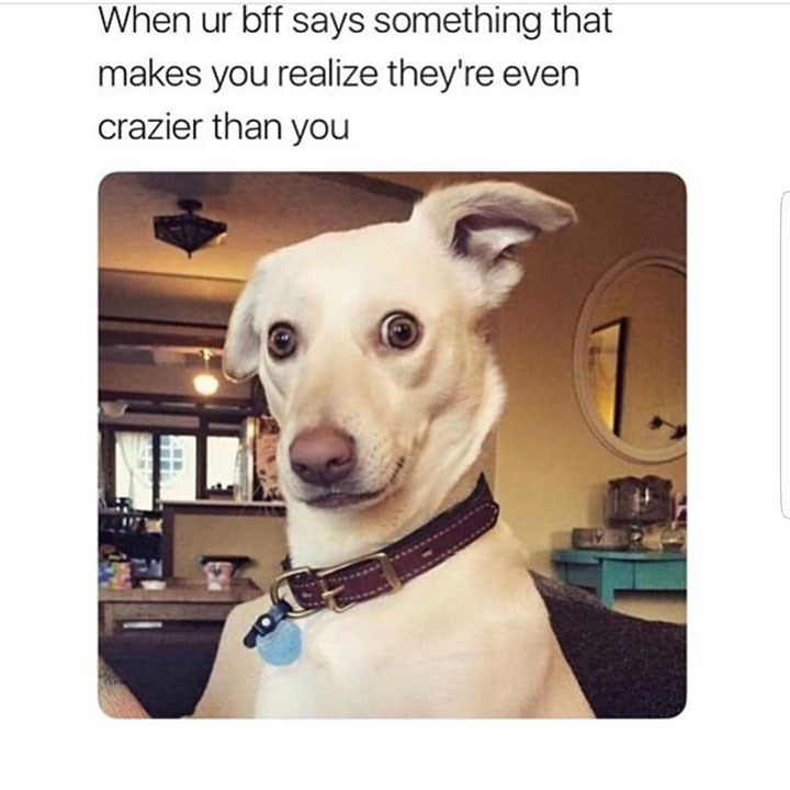 dog meme of a dog with a surprised expression and one ear is raised