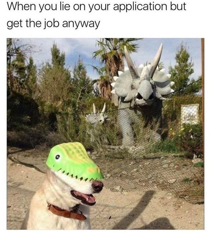 dog meme of a dog wearing a crocodile mask