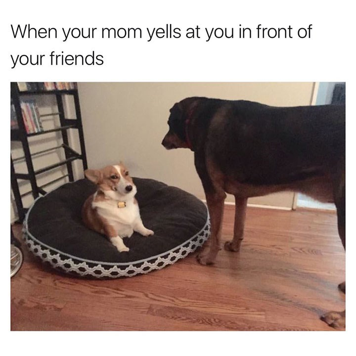 dog meme of a big dog standing in front of a corgi