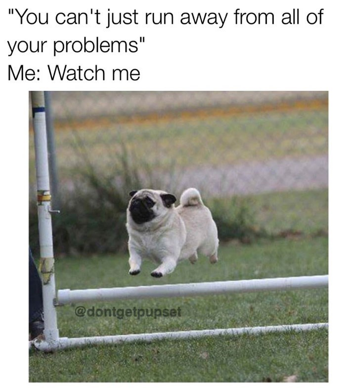 dog meme of a pug jumping over a fence