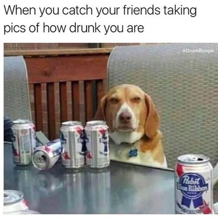 dog meme of a dog next to a bunch of empty beer bottles