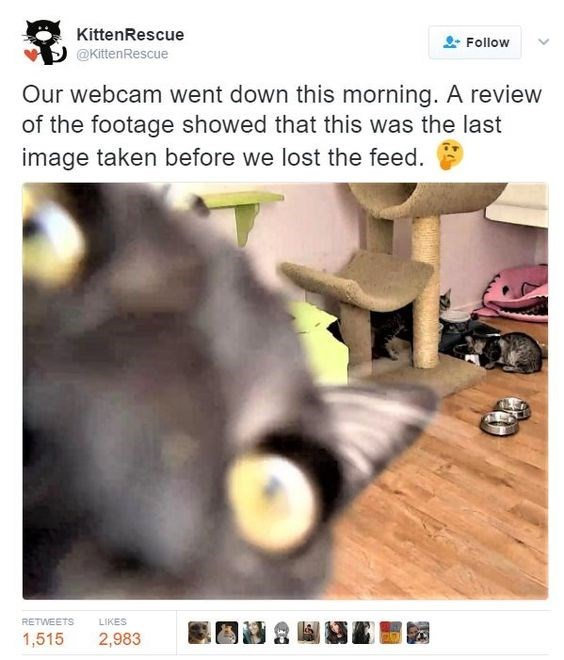 caturday - Screenshot - KittenRescue Follow @KittenRescue Our webcam went down this morning. A review of the footage showed that this was the last image taken before we lost the feed RETWEETS LIKES 1,515 2,983