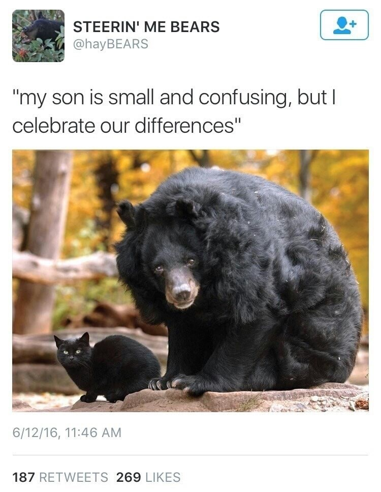"caturday - Bear - STEERIN' ME BEARS @hayBEARS ""my son is small and confusing, but I celebrate our differences"" 6/12/16, 11:46 AM 187 RETWEETS 269 LIKES"