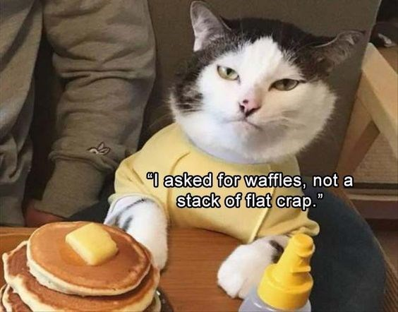 caturday - Cat - asked for waffles, not a stack of flat crap.""