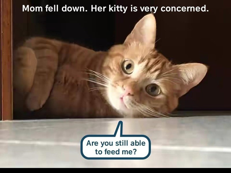 Cat - Mom fell down. Her kitty is very concerned. Are you still able to feed me?