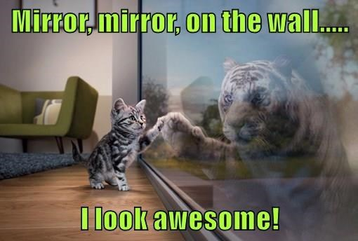 Cat - Mirror mirror, On the wall... I look awesome!